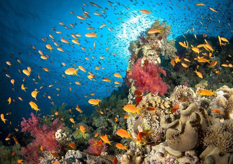 reef-scene-547695899-59bb2f140d327a0011ad7323.jpg