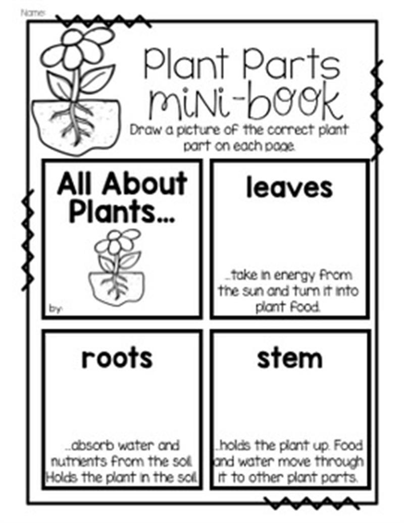 plant parts mini book.jpg
