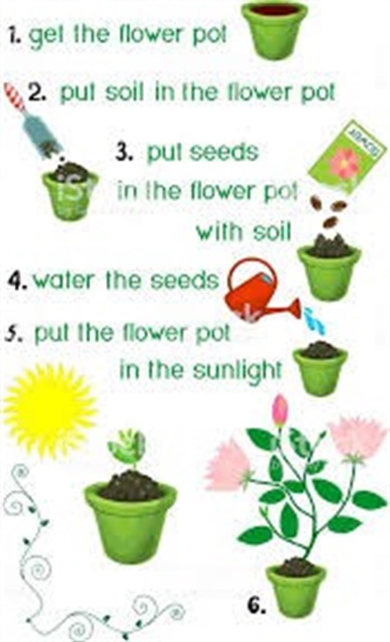 plant seeds.jpg