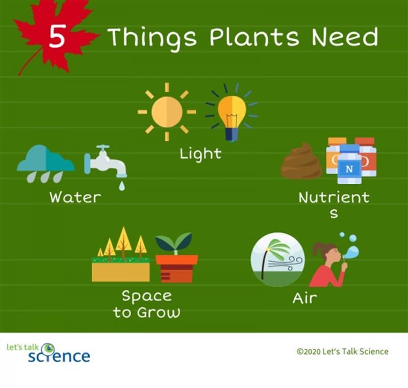 plants need.jpg